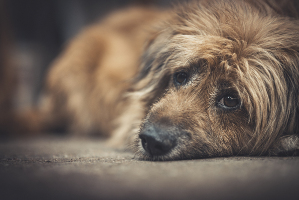 HB 3729 Would Deter Abusers From Ever Owning Another Animal