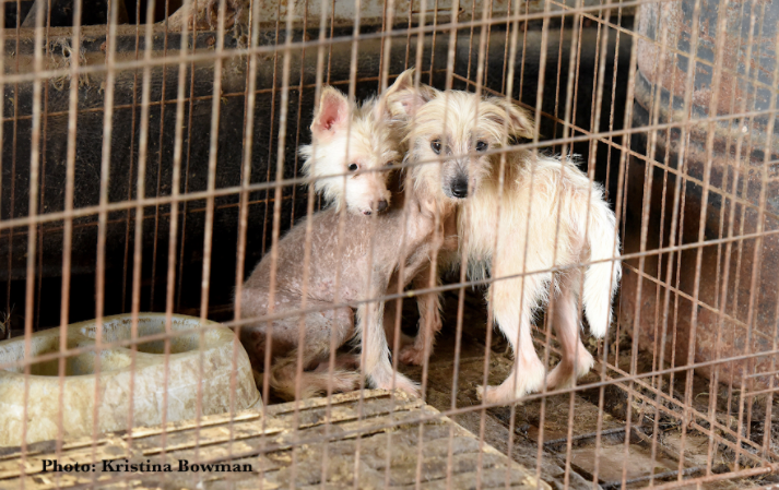 Our Fight is Not Over: The Texas Legislature is Moving to Abolish Measures that Prevent Puppy Mills