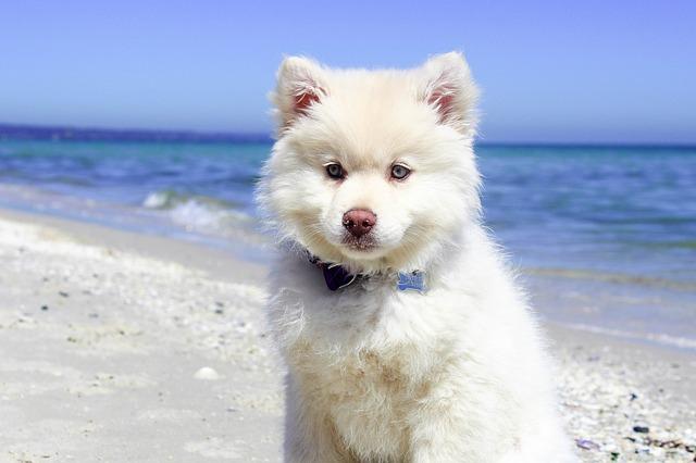 beach-1845081_640.jpg