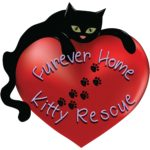 Furrever-Home-Kitty-Rescue