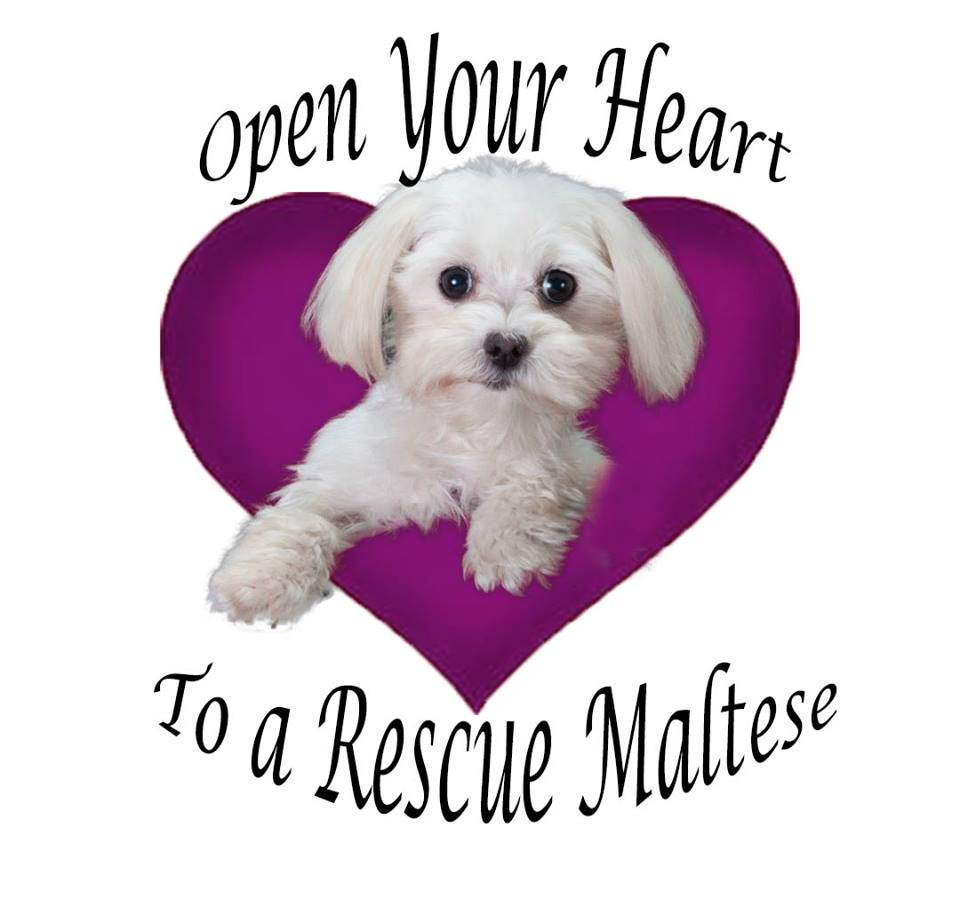 Maltese-Rescue-California