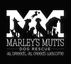 Marleys-mutts