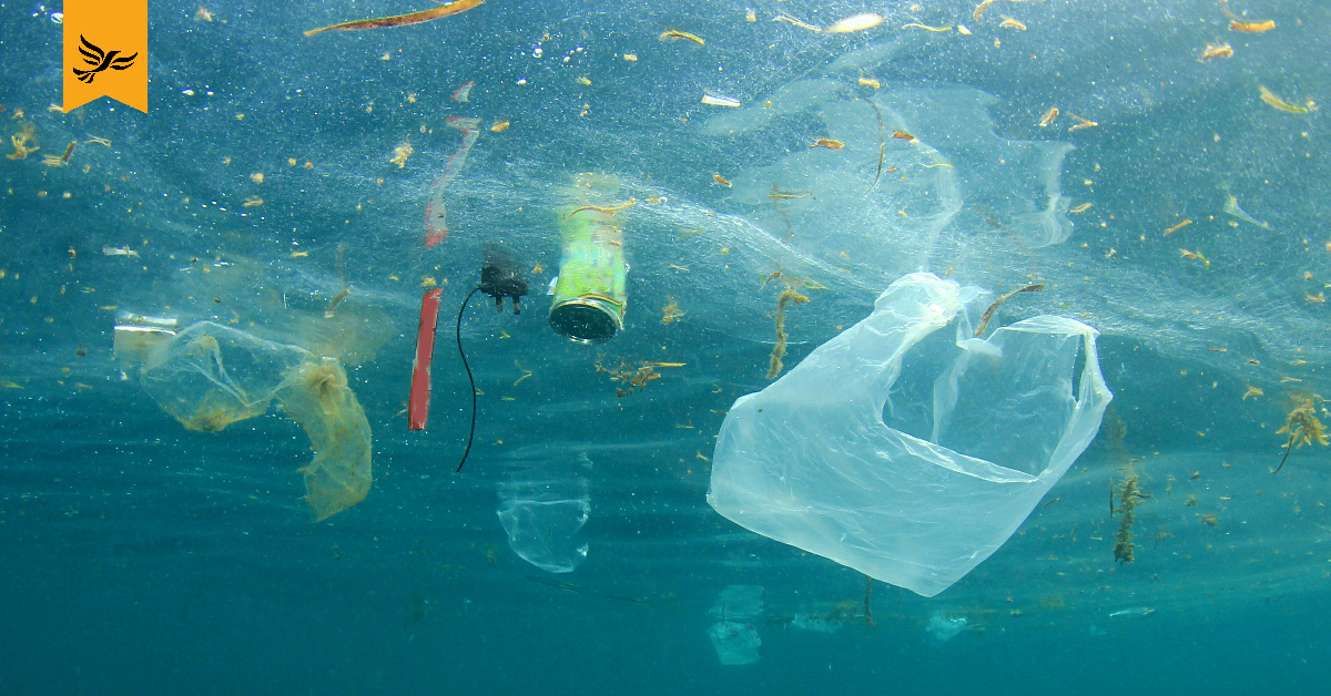 Plastic waste floating on the surface of water. Plastic like this is wreaking havoc on the environment