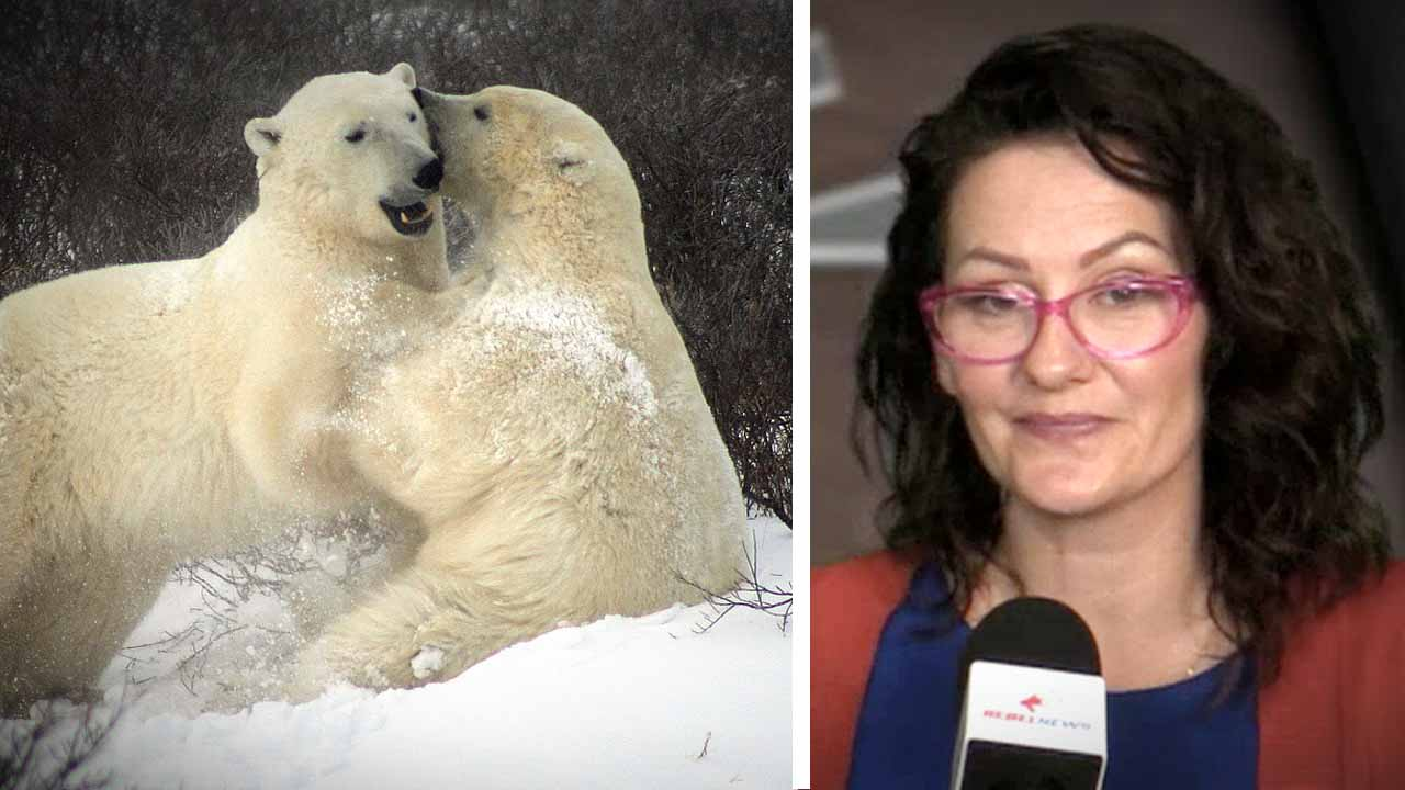 Polar bears aplenty! Feds reject Inuit claim that hunting quotas must be raised to keep population in check