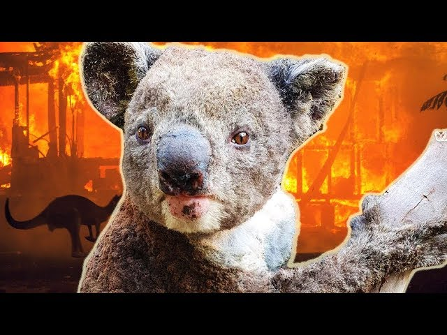 (WATCH) Paul Joseph Watson: The truth about the Australian bushfires