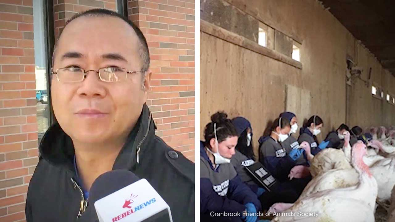 Alberta turkey farm invader in court: Why does Maxwell Ming Mah have a Toronto lawyer?