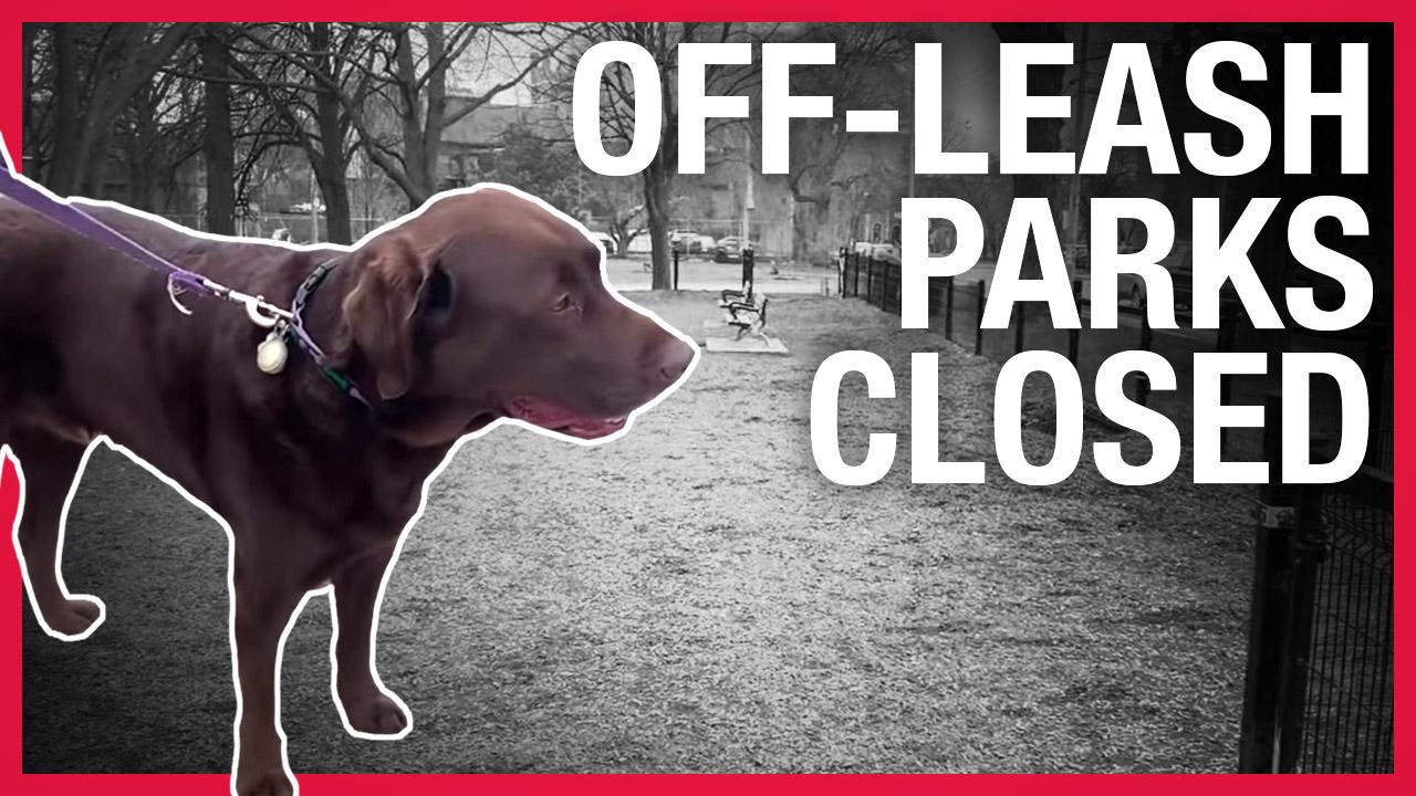 Next up, the dogs: Coronavirus shuts down Toronto's off-leash parks