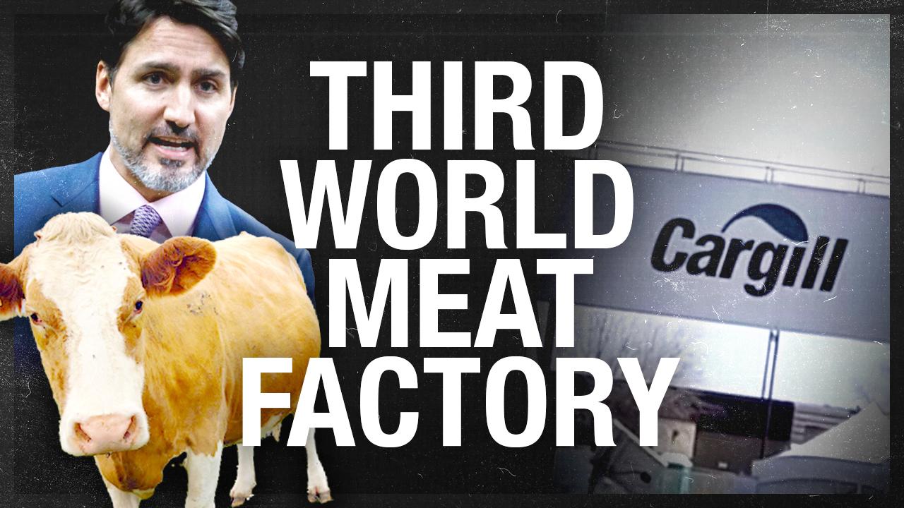 Cargill meat packing plant closure: COVID-19 outbreak among foreign workers tops 500 cases