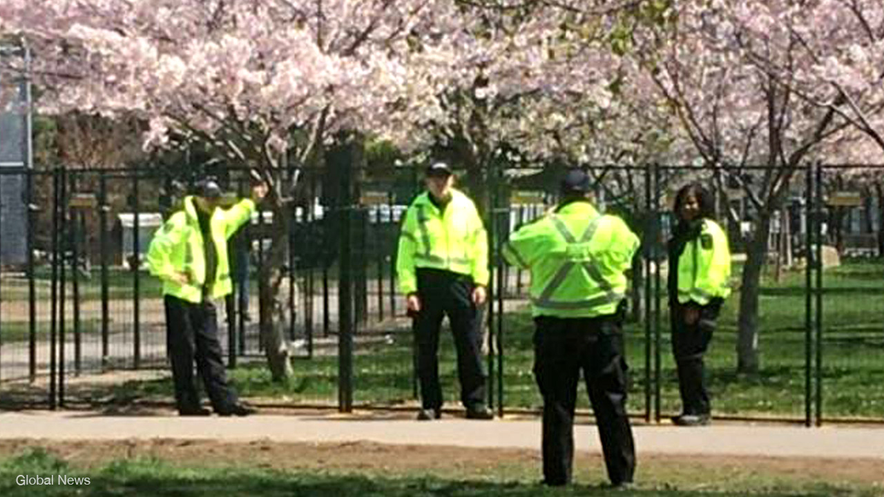 Toronto bylaw officers pose for photos with fenced-off cherry blossoms