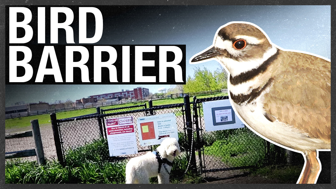 Protected bird nest in Toronto shuts down newly opened off-leash dog park