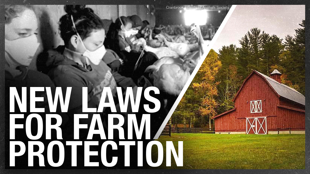 """""""Chicken huggers"""" hate new """"ag gag"""" law. So what's really in Bill 156?"""