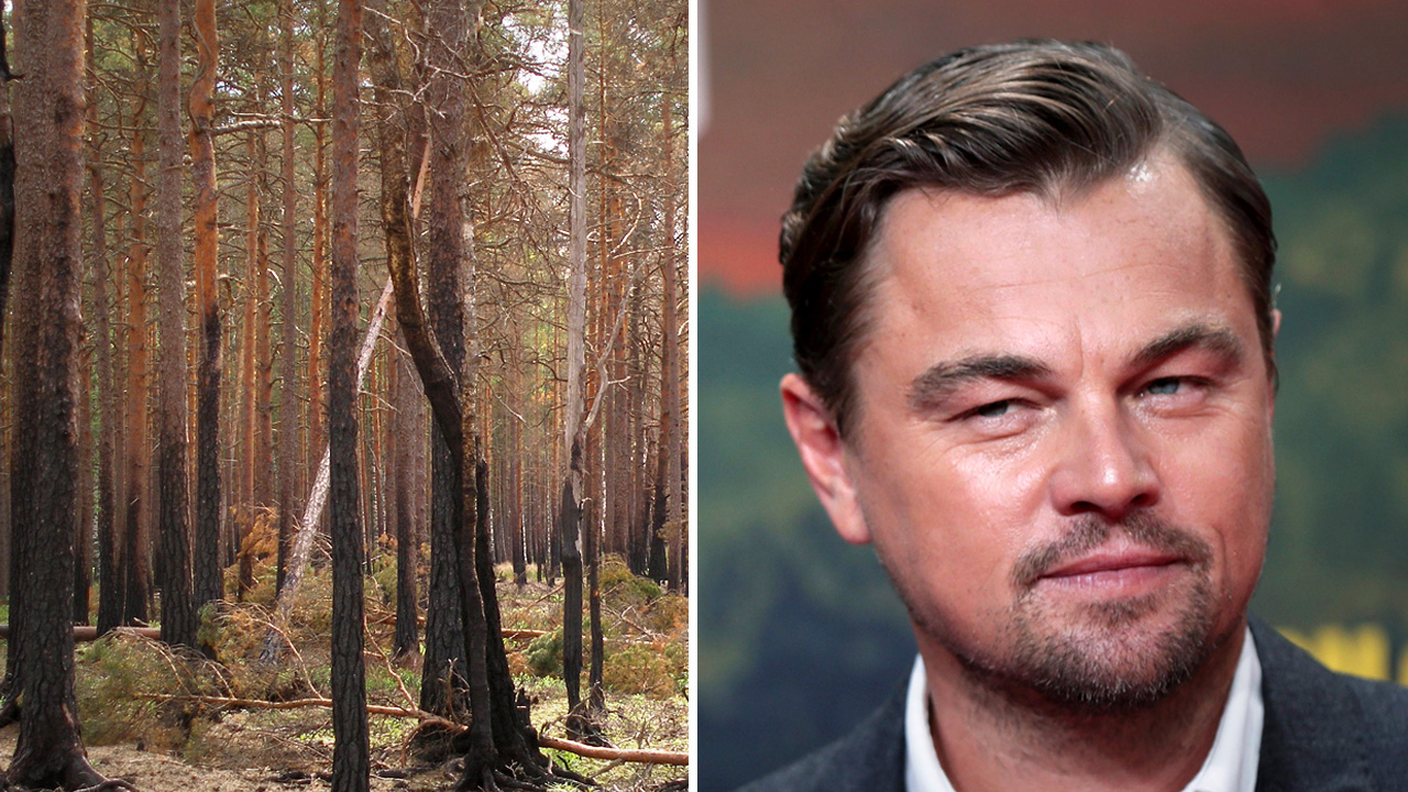 "HOLLYWOOD ACTORS: America's ""tree-to-toilet pipeline"" destroying Canadian forests"
