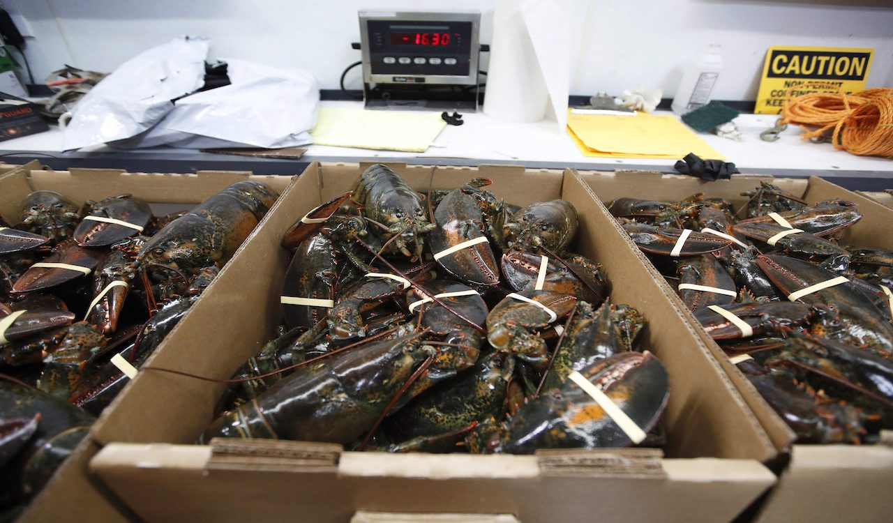New Brunswick shellfish company hit with fine for 'abusing' Temporary Foreign Workers