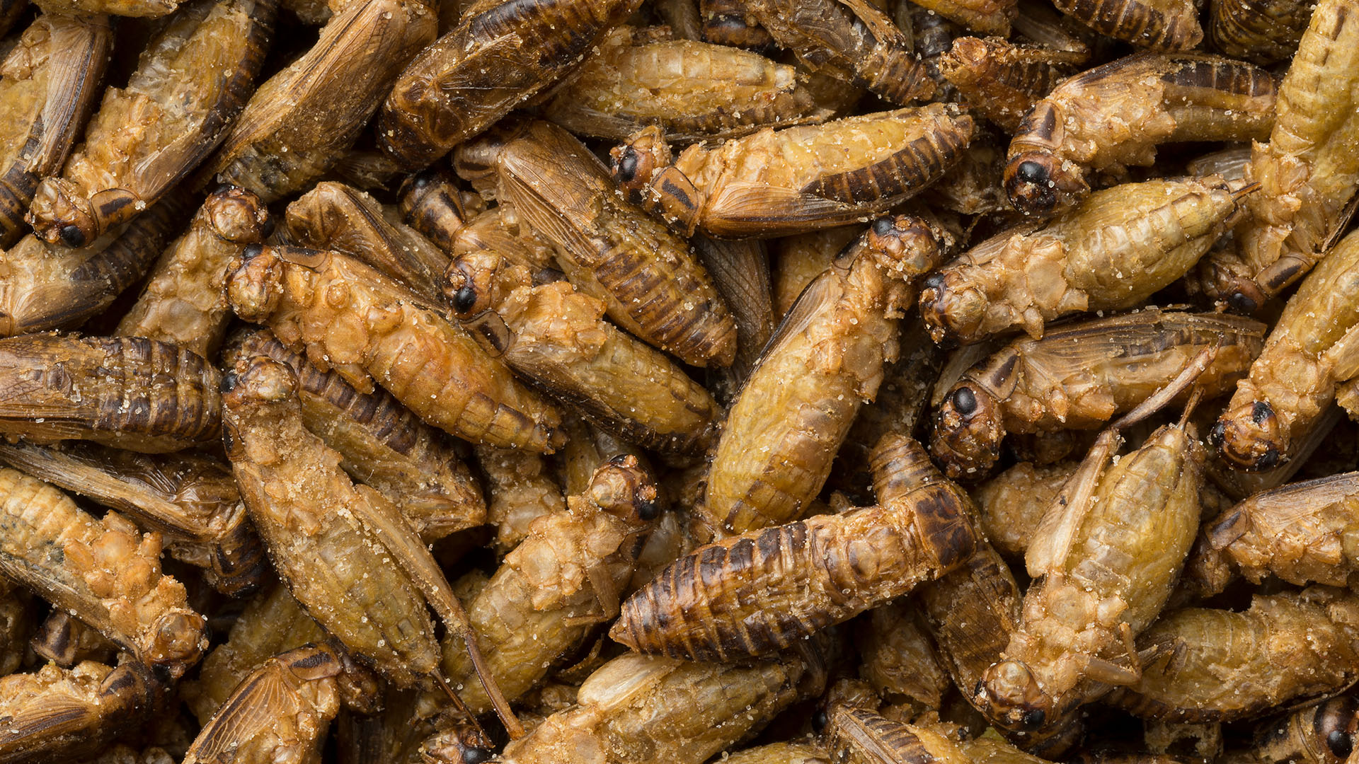 Trudeau gov't seeking specifications for insects as food