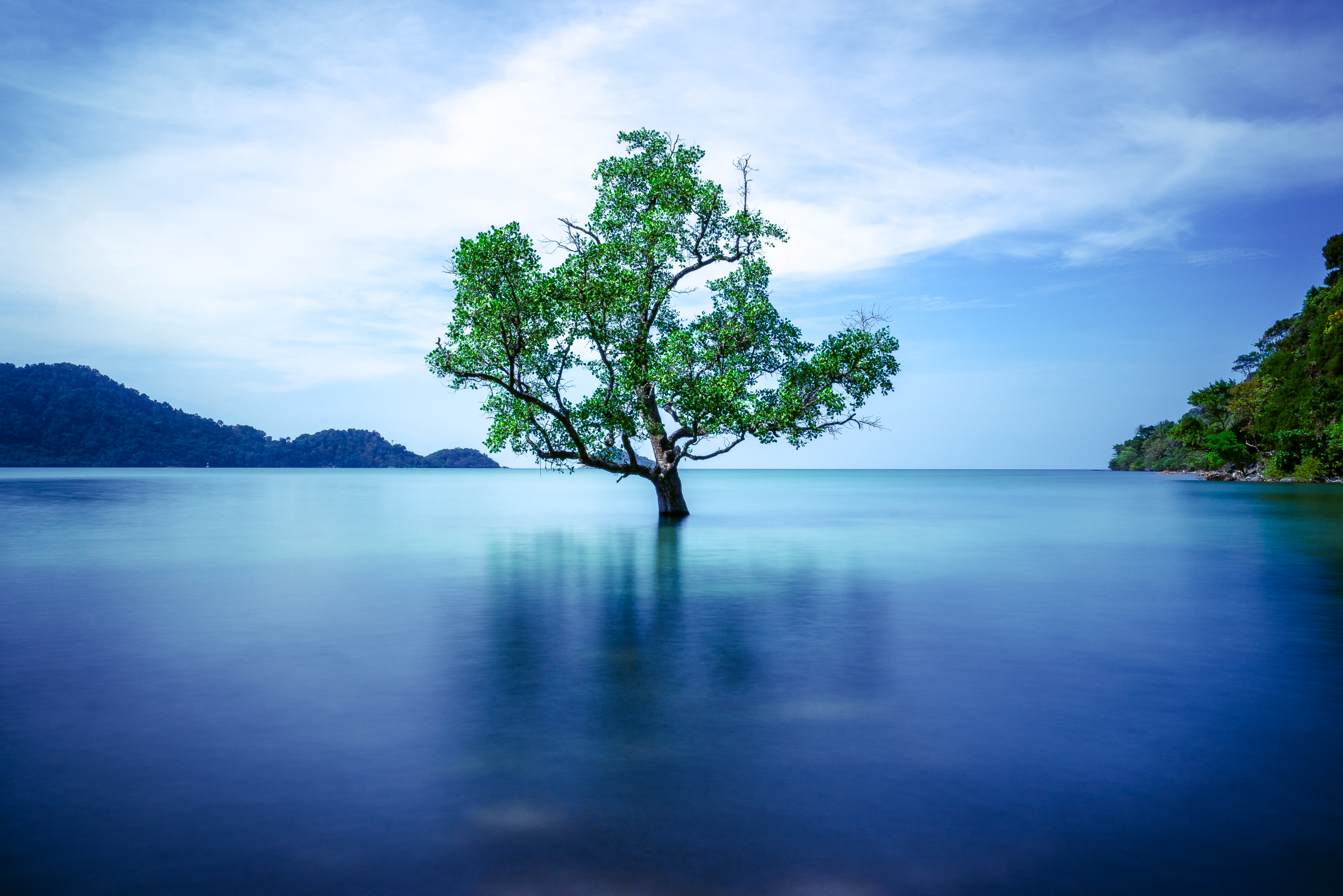 lone_tree_in_middle_of_still_lake-scopio-11b239e6-1875-40ee-8690-0b68916951be.jpg