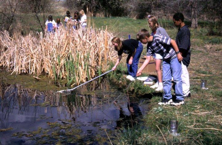 children-netting-in-pond-725x472.jpg