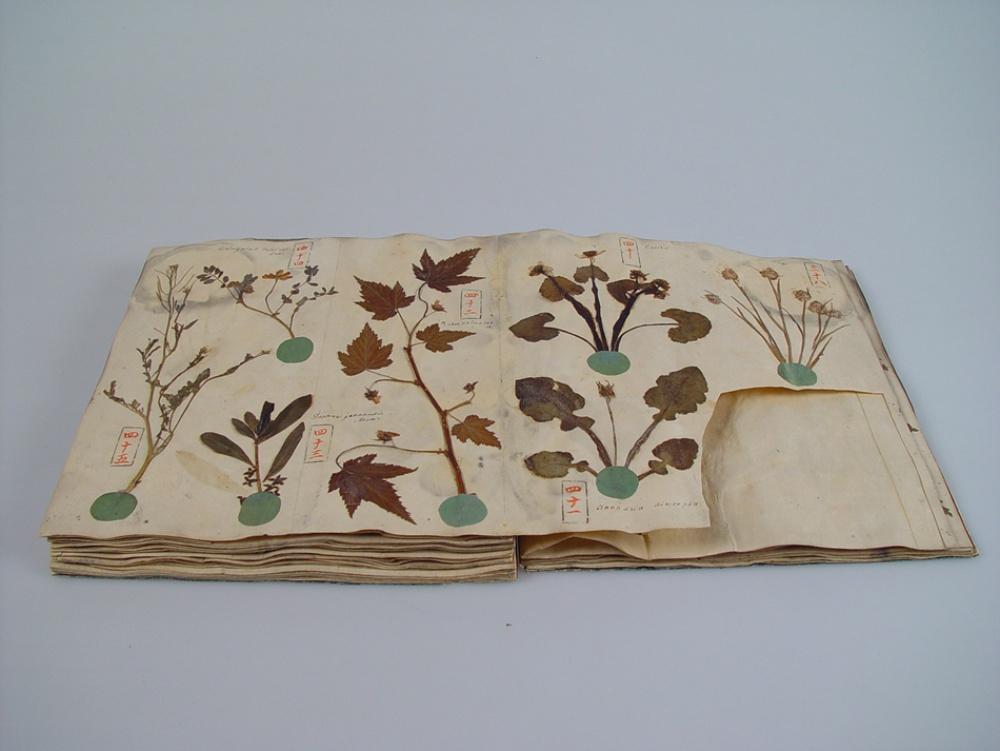 Naturalis_Biodiversity_Center_-_Siebold_Collection_-_Herbarium_book.jpg