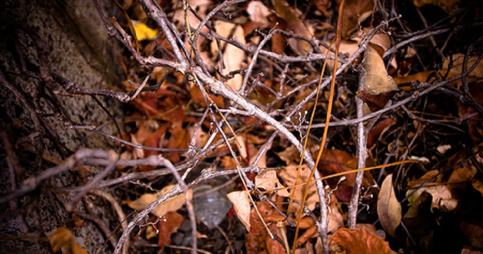 twigs-sticks.jpg