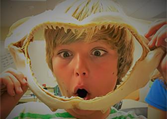 Shark_Boy.jpg