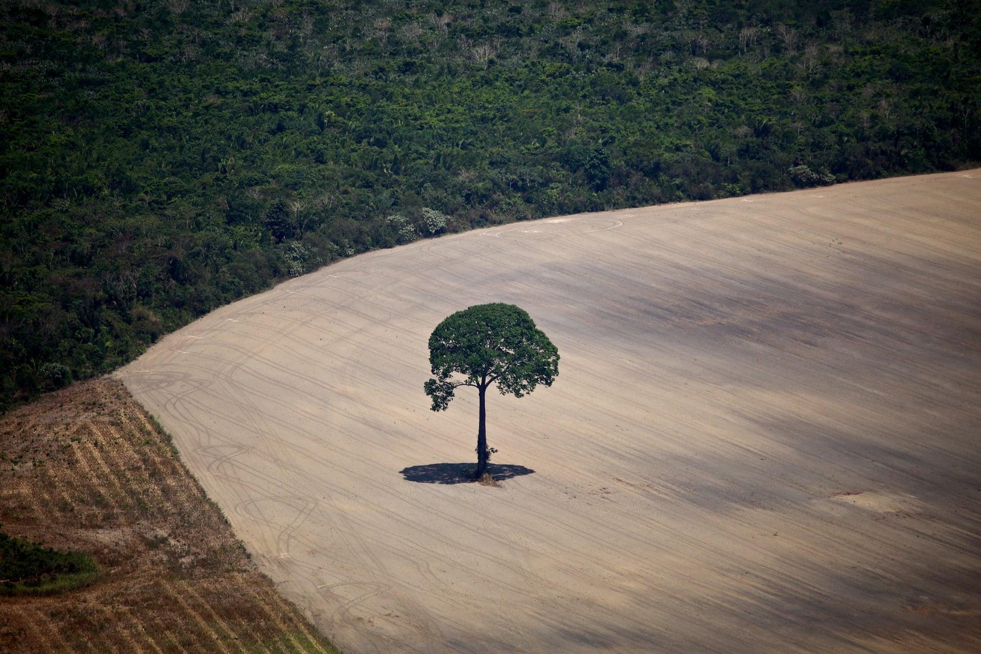 Rijden op soja- en palmolie behoort vanaf 2023 tot het verleden