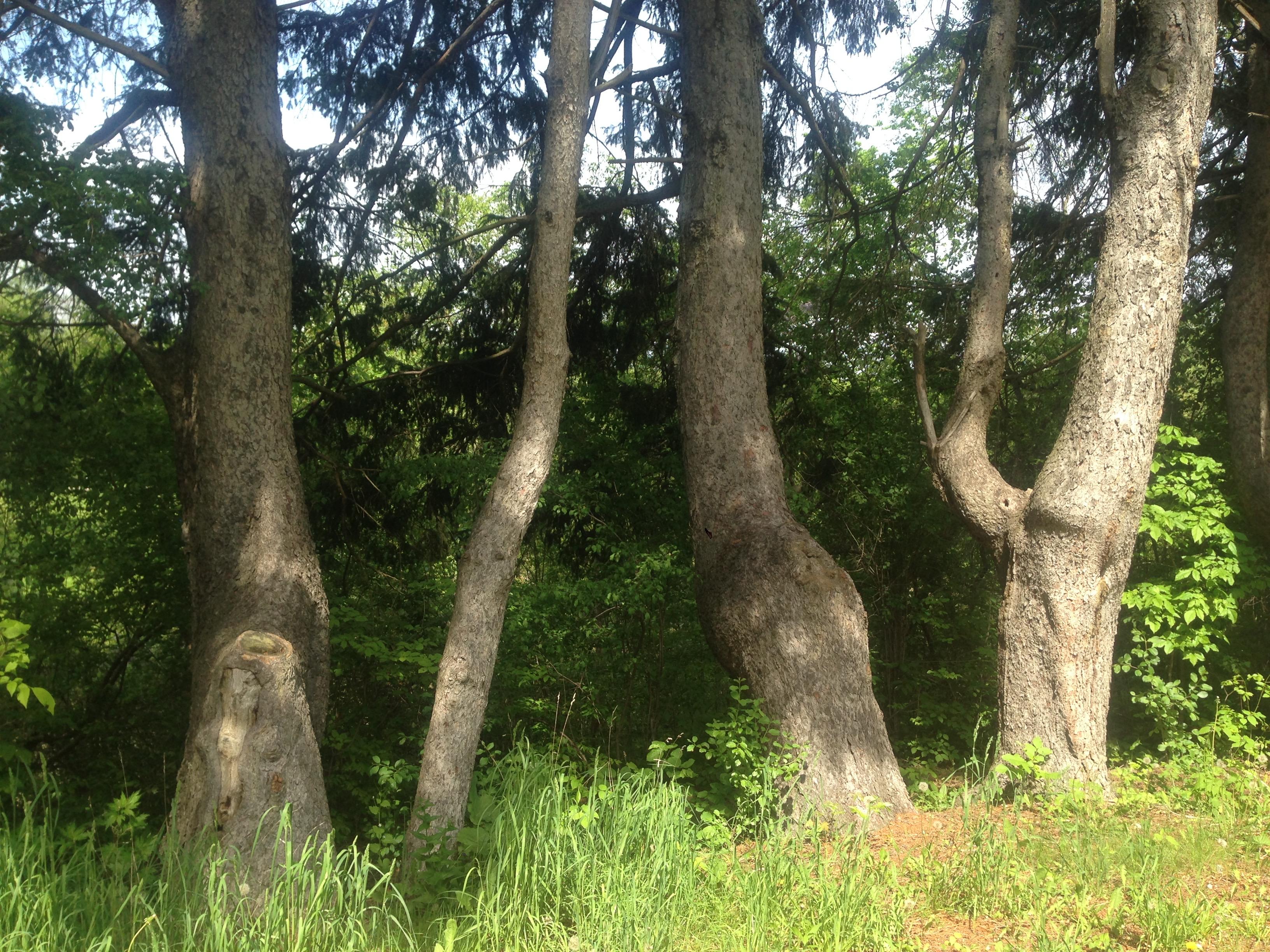 Trees in Toronto Park