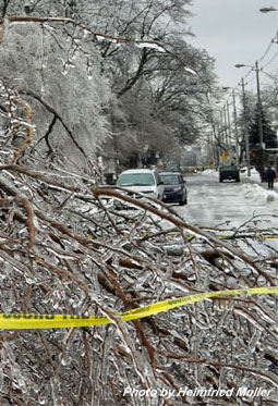 Street blocked by ice storm fallen tree