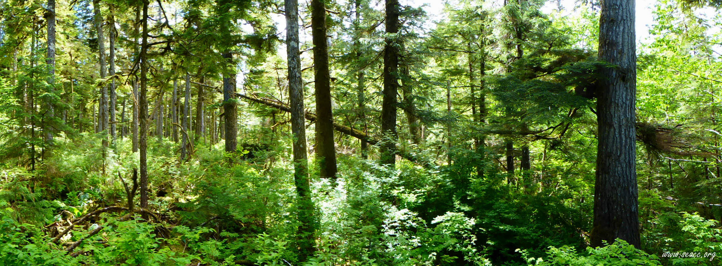 Forest_panorama.jpg