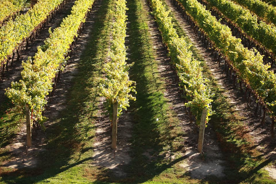 MP Baldinelli Stands-Up For Local Grape Growers and Wineries