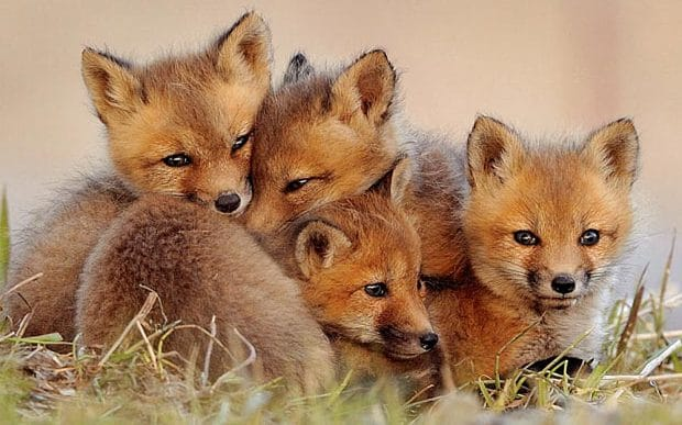 We Stand Up Against Fox Hunting