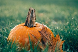 pumpkin_october_tranquility.jpg