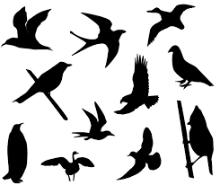 birds_shadows.png