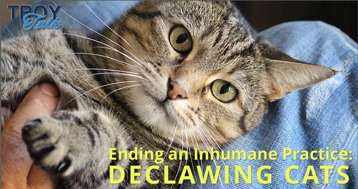 declawing_cats.png
