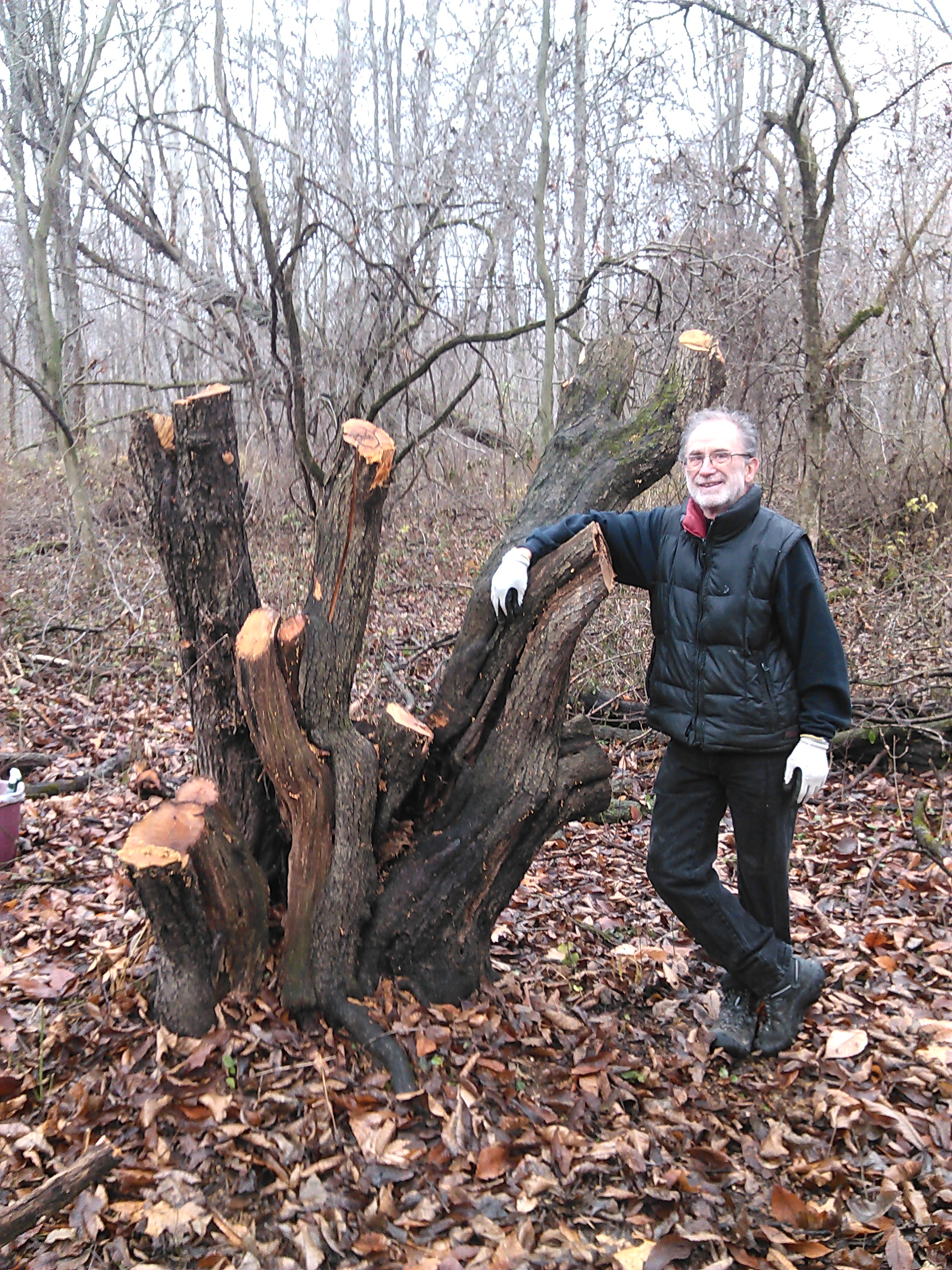 Mick with cut Buckthorn