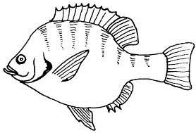 Post_8_-_Fish.jpg
