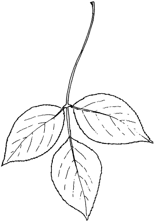 Post_12_-_Leaf_Sketch.png