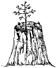 Post_17_-_Tree_on_Stump.png