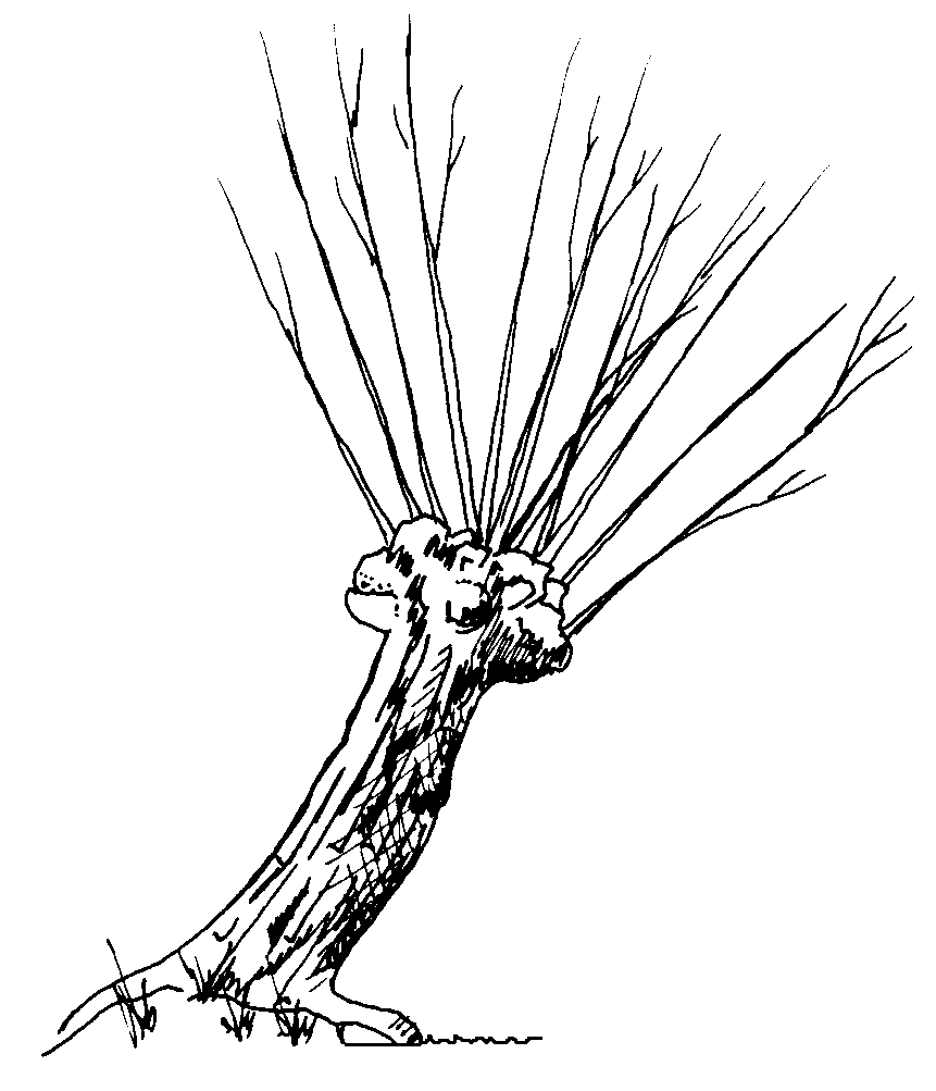 Post_20_-_Willow_Twig.png