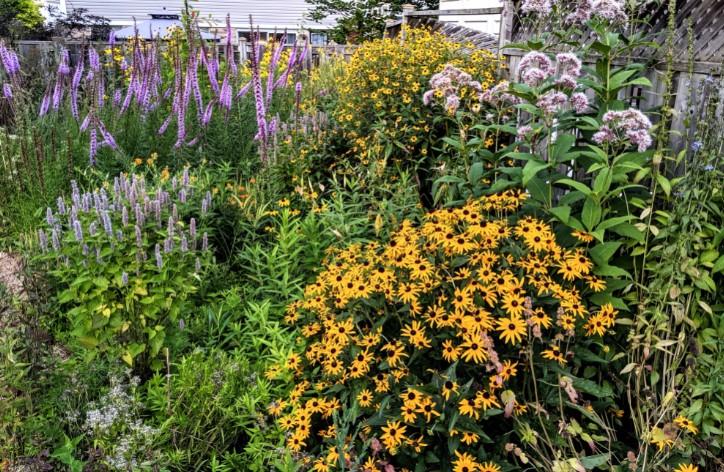 Native_Plant_Garden_Dan_Marina.jpg