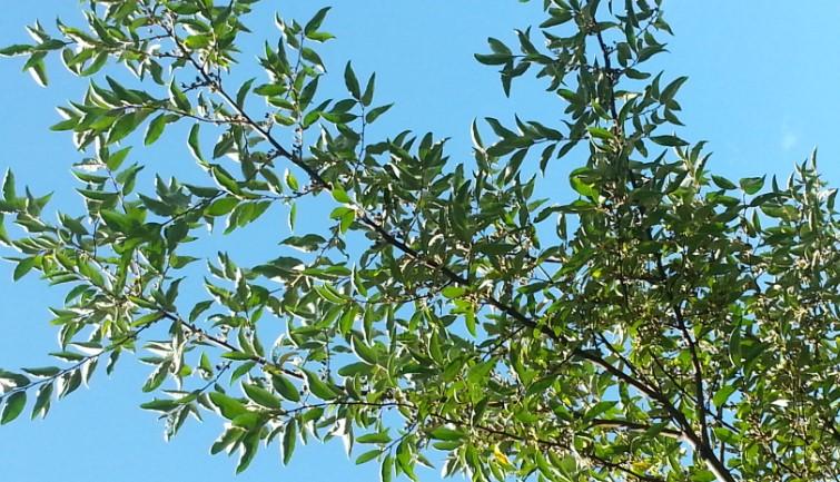 Autumn_Olive.jpg