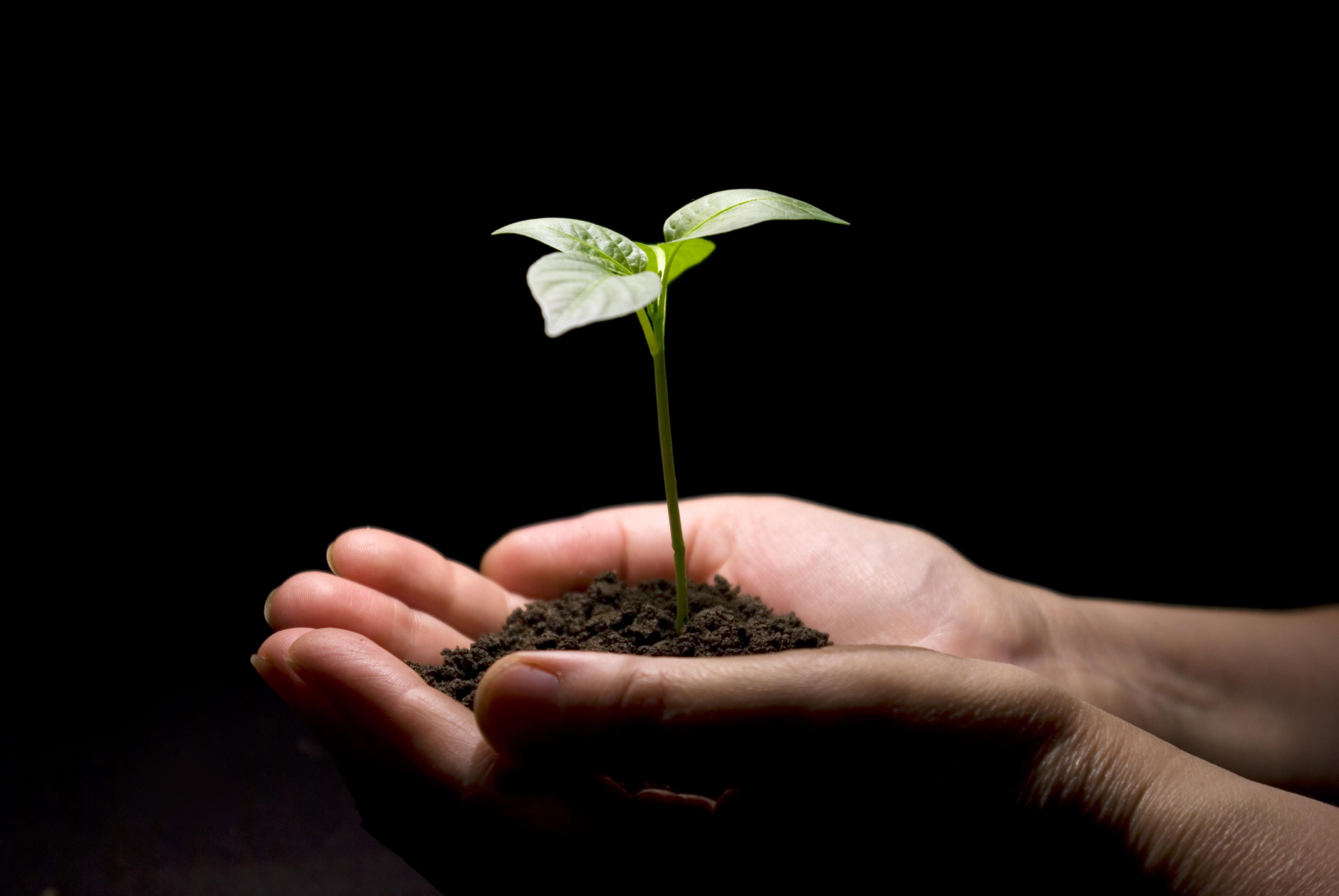 hands___plant.jpg