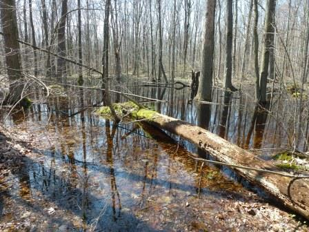 Bebensee swamp