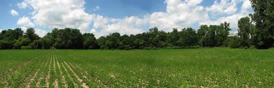 Blain-Farm.jpg