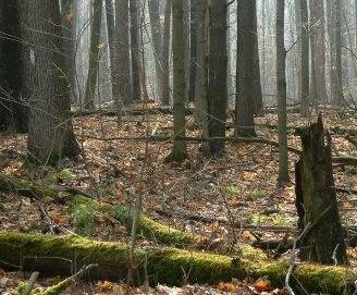 Eberhardt_Forest_028.jpg