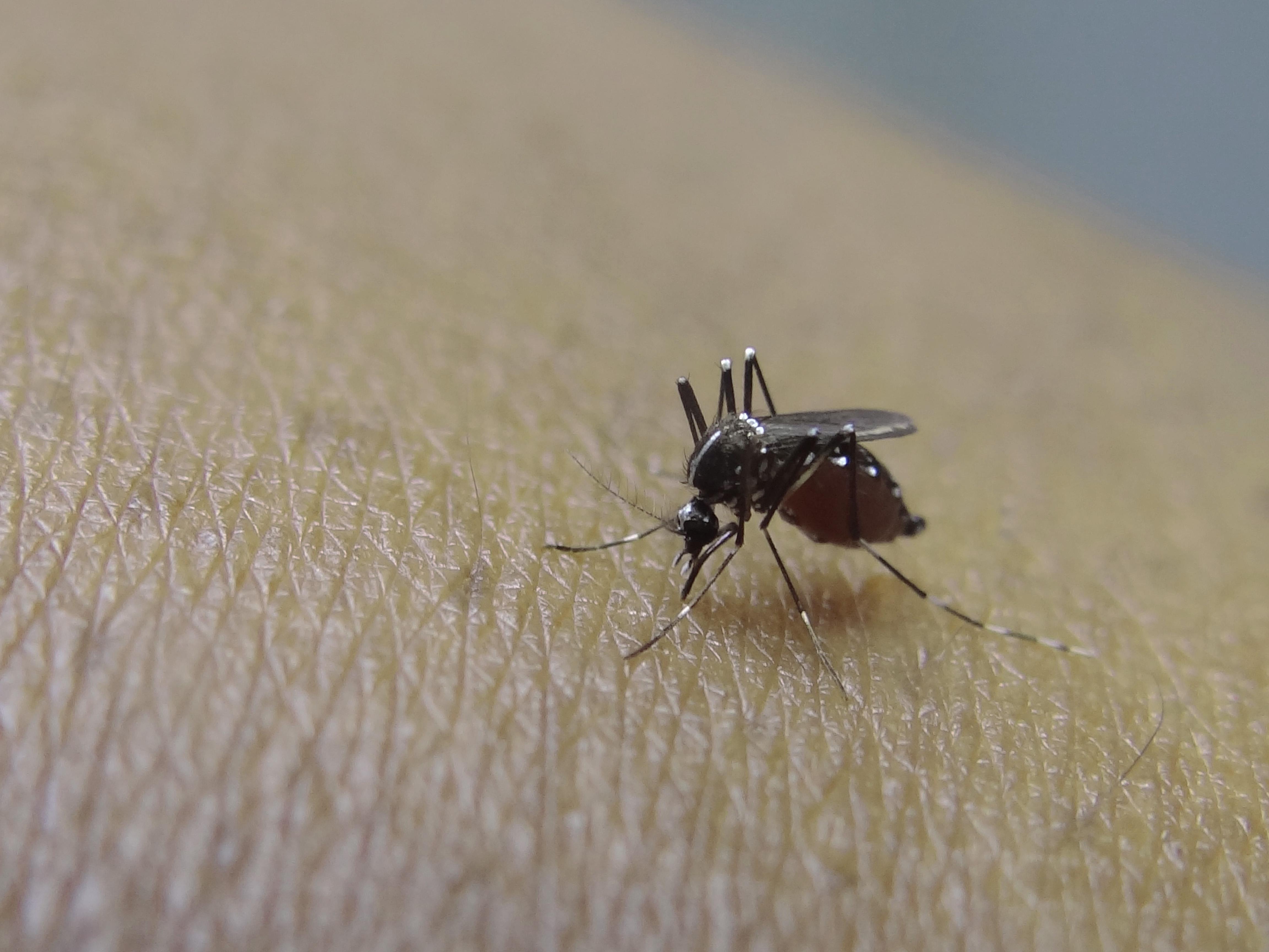 09c-Mosquito.jpg