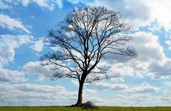tree_340.jpg