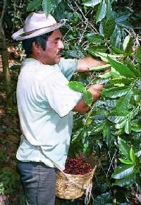 fair_trade_farmer.jpg