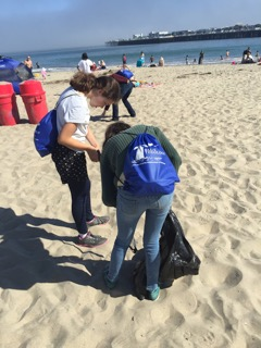 volunteer_beach_clean_up.jpeg