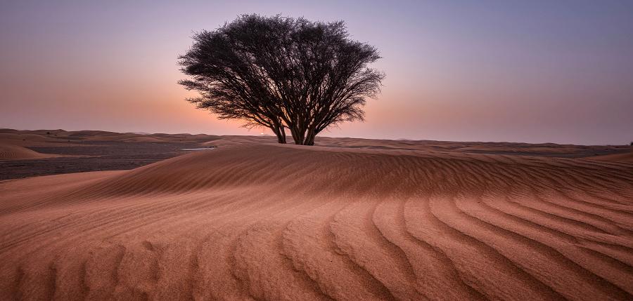 desert-tree.png