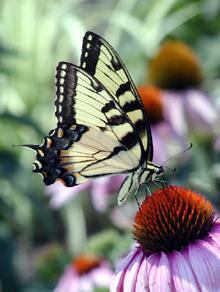 01_Butterfly.jpg