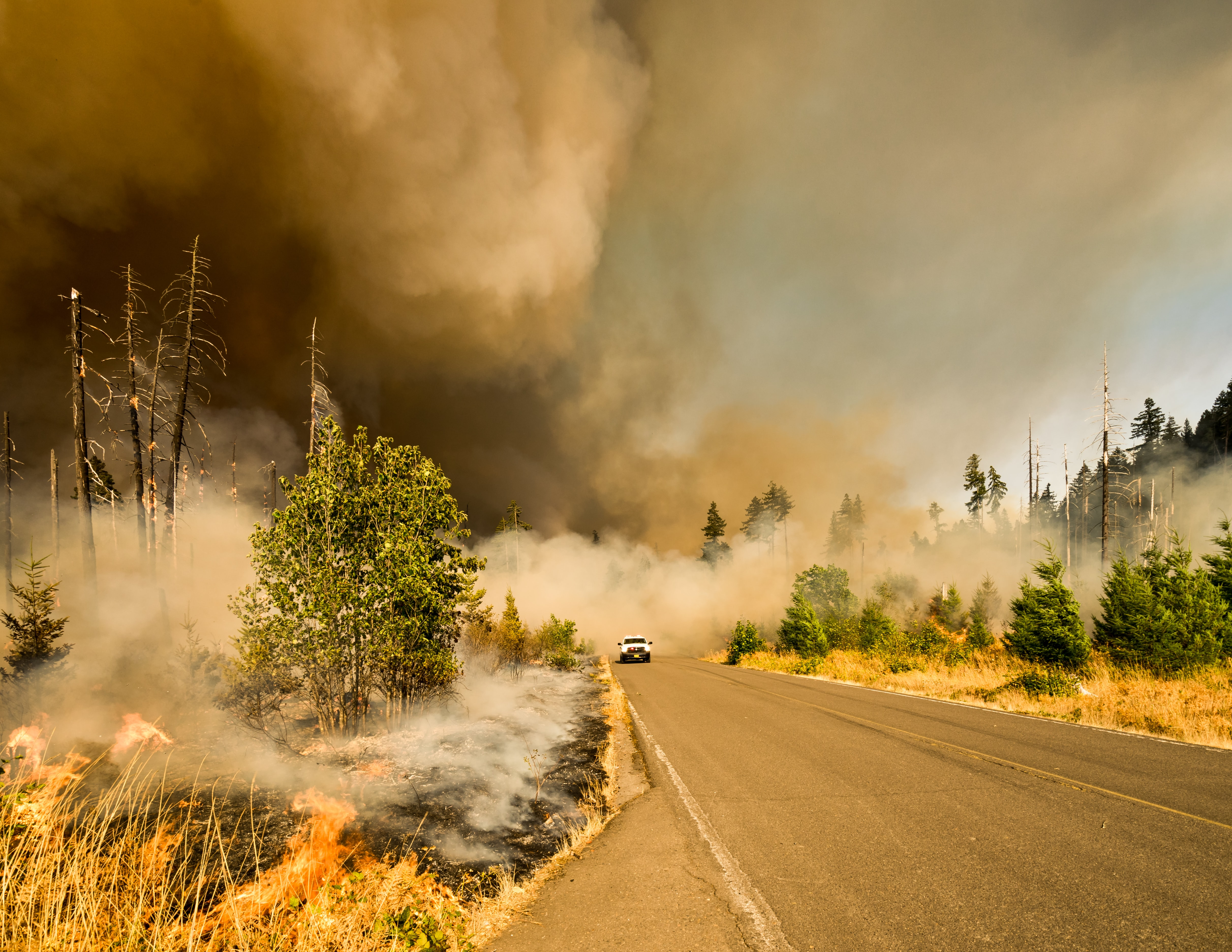 Forest fire smoldering along a country road.